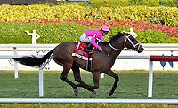 HALLANDALE, FLORIDA- JANUARY 25: Michael Hui's Zulu Alpha ridden by Tyler Gaffalione had tough trip early on but maintained his position at the rail, using it to as a springboard to victory in the Grade 1 Pegasus World Cup Turf Invitational at odds of 11-1 at Gulfstream Park on January 25, 2020 in Hallandale, Florida<br /> <br /> People:  Zulu Alpha, Tyler Gaffalione