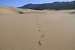 Footprints in Great Sand Dunes National Park, Alamosa, Colorado, John offers private photo trips to Great Sand Dunes National Park and all of Colorado. All year long.