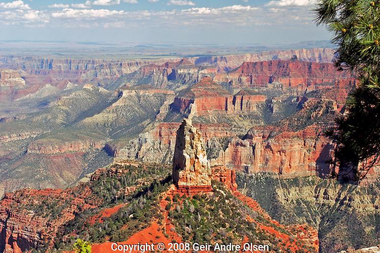 Ponderosa pine frames tha view of Point Imerial view at Grand Canyon national park, North Rim, Utah