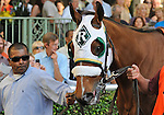 11 January 30: Mucho Macho Man before the the 22nd running of the grade 3 Holy Bull Stakes for three year olds at Gulfstream Park in Hallandale Beach, Florida.  (Bob Mayberger/Eclipse Sportswire)