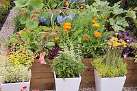 Thymes in pots, herbs, calendula, chives, zucchini, carrots, growing in herb and vegetable garden with flowers, cabbage, in raised in beds
