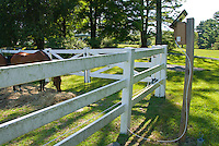 Farm animal horses in fenced paddock, with pasture lawn, solar powered electrical fencing, house at rear