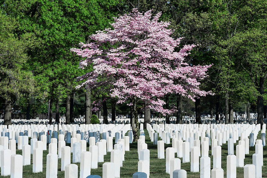 Beverly National Military Cemetery, Beverly, New Jersey, USA