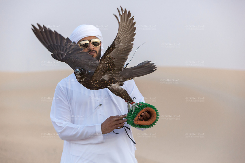 """United Arab Emirates (UAE). Dubai. Humaid Al Tayer (C) is a rich Emirati man with a passion for falcons. He is the owner of A&H Falcons which take parts in various falcons' competitions in the UAE. On a remote desert area, he holds on a glove a Gyr-Peregrine falcon. As part of daily training, the hawk flies behind the plane and tries to catch a prey tied on a rope. The man wears the traditional white thobe. A thawb (thobe, dishdasha, kandora) is an ankle-length garment, usually with long sleeves, similar to a robe, kaftan or tunic, commonly worn in the Arabian Peninsula. The headdress is called ghutrah. The Gyr Peregrine falcon is a hybrid of the world's largest hawk, the Gyrfalcon and the third largest hawk, the Peregrine falcon. Falcons are birds of prey in the genus Falco, which includes about 40 species. Adult falcons have thin, tapered wings, which enable them to fly at high speed and change direction rapidly. Additionally, they have keen eyesight for detecting food at a distance or during flight, strong feet equipped with talons for grasping or killing prey, and powerful, curved beaks for tearing flesh. Falcons kill with their beaks, using a """"tooth"""" on the side of their beaks. The United Arab Emirates (UAE) is a country in Western Asia at the northeast end of the Arabian Peninsula. 22.02.2020  © 2020 Didier Ruef"""