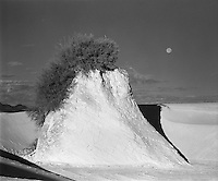 Moonset at White Sands.  If you look closely, you can see a bird perched on top of the bush in this photo.<br /> <br /> Mamiya RB67 Pro SD, 180mm lens, Kodak Tri-X film, red filter