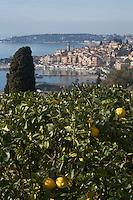 Europe/France/06/Alpes-Maritimes/Menton: La vieille ville et en premier plan des plantations de citronniers