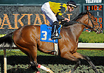 Scenes and horse racing personalities (Joseph Rocco Jr. wins the 8th race aboard Eve Giselle) from around the track during Rebel Stakes Day on March 19, 2011 at Oaklawn Park in Hot Springs, Arkansas.  (Bob Mayberger/Eclipse Sportswire)