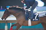 SHA TIN,HONG KONG-DECEMBER 08 : Karar,trained by Francis-Henri Graffard,exercises in preparation for the Hong Kong Mile at Sha Tin Racecourse on December 8,2017 in Sha Tin,New Territories,Hong Kong (Photo by Kaz Ishida/Eclipse Sportswire/Getty Images)