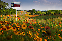 Texas Flag mailbox surrounded by vivid Indian Blanket Firewheels and colorful Yellow Daisy Coreopsis; Gaillardia wildflowers next to country road in the Texas Hill Country - Stock Image