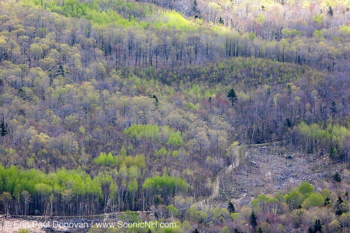 Forest during the spring months from the summit of Middle Sugarloaf Mountain in Bethlehem, New Hampshire USA. Timber Harvest along Forest Road 155 is in the foreground. This area was once part of the Zealand Valley Railroad, which was a logging railroad in operation from 1886-1897.
