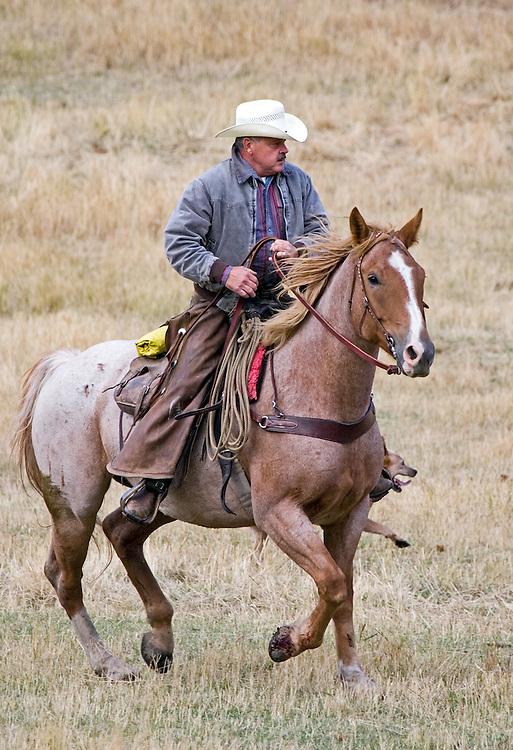 Cowboy riding horse through field