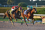 DucDuc (4) with Orlando Bocachica up and Csaba (3) with rider Luis Saez in a deadheat for the Fred Hooper Handicap (G3). Calder Race Course. Miami Gardens, Florida. 11-24-2012.  Arron Haggart/Eclipse Sportswire