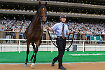 FUCHU,JAPAN-JUNE 25: Un Autre,by I'll Have Another,appears the winner's Circle after winning the maiden race for 2yo at Tokyo Racecourse on June 25,2016 in Fuchu,Tokyo,Japan (Photo by Kaz Ishida/Eclipse Sportswire/Getty Images)