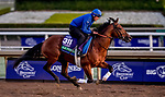 October 30, 2019: Breeders' Cup Turf entrant Old Persian, trained by Charlie Appleby, exercises in preparation for the Breeders' Cup World Championships at Santa Anita Park in Arcadia, California on October 30, 2019. Michael McInally/Eclipse Sportswire/Breeders' Cup/CSM