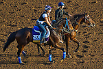 October 27, 2014:  Stanwyck, trained by John Shirreffs, exercises in preparation for the Breeders' Cup Distaff at Santa Anita Race Course in Arcadia, California on October 27, 2014. John Voorhees/ESW/CSM