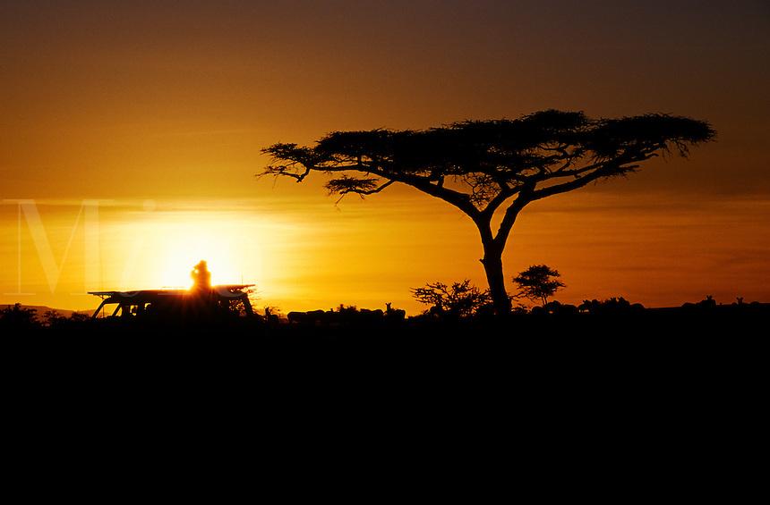 An African sunset silhouettes an ACACIA TREE & Land cruiser - SERENGETI NATIONAL PARK, TANZANIA
