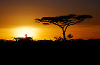 An African sunset silhouettes an ACACIA TREE & Land cruiser - SERENGETI NATIONAL PARK, TANZANIA