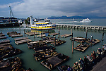 Retro Image of San Francisco downtown Pier 39 with sea lions on docks with people watching and tour boats, San Francisco, California USA