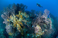 Diver at West Wall<br />
