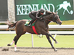 07 April 2011.  Hip #54 Scat Daddy - Russian Broad colt consigned by Eddie Woods.
