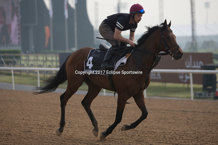 DUBAI,UNITED ARAB EMIRATES-MARCH 23: Washington DC,trained by Aidan O'Brien,exercises in preparation for the Al Quoz Sprint at Meydan Racecourse on March 23,2017 in Dubai,United Arab Emirates (Photo by Kaz Ishida/Eclipse Sportswire/Getty Images)