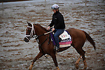 October 28, 2015:  Sapphire Kitten, trained by Joe Sharp and owned by Kenneth L. and Sarah K. Ramsey, exercises in preparation for the Breeders' Cup Juvenile Fillies Turf at Keeneland Race Track in Lexington, Kentucky on October 28, 2015.  John Voorhees/ESW/CSM