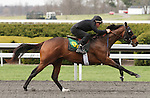 April 03, 2014: Hip 92 Line of David - Coqui consigned by Richwood South worked 1/8 in 09:4.  Candice Chavez/ESW/CSM