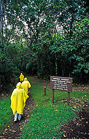Hikers in yellow raincoats walk along a tree-lined path on Mauna Loa mountain on the Big Island of Hawaii.