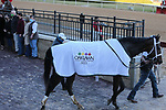 January 22, 2021: Caddo River (7) after winning the Smarty Jones Stakes at Oaklawn Racing Casino Resort in Hot Springs, Arkansas on January 22, 2021. Justin Manning/Eclipse Sportswire/CSM