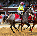 SARATOGA SPRINGS, NEW YORK, AUGUST 25: A raving Beauty, #1, in post parade for the Woodford Reserve Ballston Spa at Saratoga Racecorse August 25, 2018 in Saratoga Springs, New York. ( Photo by Sue Kawczynski/Eclipse Sportswire/Getty Images)