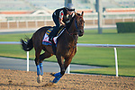 DUBAI,UNITED ARAB EMIRATES-MARCH 30: Mubtaahij,trained by Bob Baffert,exercises in preparation for the Dubai World Cup at Meydan Racecourse on March 30,2018 in Dubai,United Arab Emirates (Photo by Kaz Ishida/Eclipse Sportswire/Getty Images)