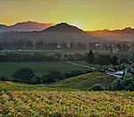 Looking over California Vineyard in Sonoma County outside of Healdsburg