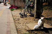 Belém, Pará, Brasil. Policia. Retranca: Homicidio - Leandro Magalhães da Silva, 32 anos (cadeirante). Gancho: Vitíma foi executada com dois tiros por desconhecido que chegou em um veículo de cor prata. Data: 18/11/2015. local: Rua dos Caripunas (entre / Av. Bernardo Sayão e Trav. Breves - Jurunas - Belém. Foto: Mauro Ângelo/Diário do Pará