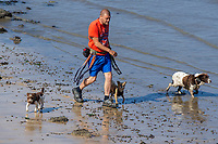 Pictured: A man walks multiple dogs along the beach during the sunny weather at Mumbles, near Swansea, Wales, UK. Thursday 19 September 2019