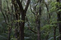 Europe, Germany, Ruhr Area, Ardey, Wetter, Herdecke, Waldbereich vor dem Eingriff<br /> <br /> Europa, Deutschland, Ruhrgebiet, Ardey, Wetter, Herdecke, area before deforestation<br /> <br /> [MODEL RELEASE: NO, Copyright: Vera Schimetzek, Bornstrasse 5, 58300 Wetter, Germany, phone: 0049.2335.970650, mobil: 0049.151.21220918, www.schimetzek-foto.de, schimetzek@web.de,<br /> Die Verwendung des Fotos ist honorarpflichtig. Keine Verwendung ohne Genehmigung.  Es gelten die AGB.<br /> For use the general terms and conditions are mandatory. No use without permission. The use of the image is subject to a fee.]