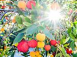 10.14.18 - Fruit Loops...