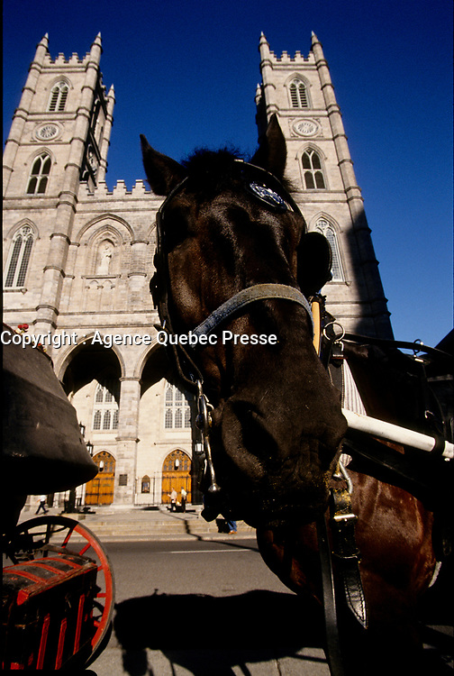 1999  File photo - Horse drawn caleche<br />  in front of Notre-Dame Basilica, Montreal, CANADA<br /> <br /> Caleches devant la Basilique Notre-Dame<br /> <br /> PHOTO : Agence Quebec Presse - Pierre Roussel