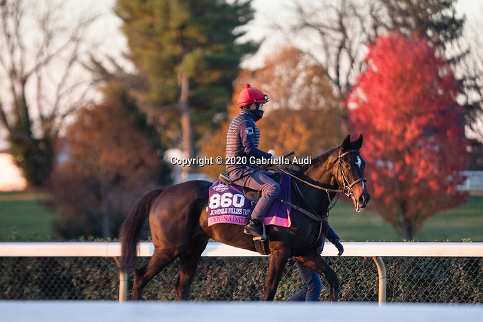 November 4, 2020: Oodnadatta, trained by trainer Mrs. John Harrington, exercises in preparation for the Breeders' Cup Juvenile Fillies Turf at Keeneland Racetrack in Lexington, Kentucky on November 4, 2020. Gabriella Audi/Eclipse Sportswire/Breeder's Cup/CSM