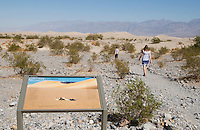 Interpretive sign at Mesquite Flat sand dunes features a photo of a sidewinder by wildlife photographer Dan Suzio. Death Valley National Park, California