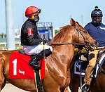 January 23, 2021:  #1 Performer with jockey Joel Rosario  on board, in the post parade before winning the Fred W Hooper GIII Stakes  at Gulfstream Park in Hallandale Beach, Florida.  Liz Lamont/Eclipse Sportswire/CSM