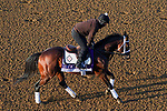 November 5, 2020: Art Collector, trained by trainer Thomas Drury Jr., exercises in preparation for the Breeders' Cup Dirt Mile at Keeneland Racetrack in Lexington, Kentucky on November 5, 2020. John Voorhees/Eclipse Sportswire/Breeders Cup/CSM