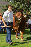 Le Festival de l'élevage et du veau de lait élevé sous la mère.<br /> Presentation des bovins de race Limousine dans le parc de la Guierle, centre-ville.