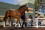 SEP 27,2014:Danetee appears at the padock in Chandelier  Stakes at Santa Anita Park in Arcadia,CA. Kazushi Ishida/ESW/CSM,