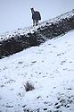 22/01/19<br /> <br /> A horse stands in a field in Flash in the Derbyshire Peak District.<br /> <br /> All Rights Reserved, F Stop Press Ltd +44 (0)7765 242650  www.fstoppress.com rod@fstoppress.com