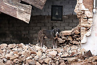 Pictured: A dog watches on from the remains of a building.<br /> Re: Five people have reportedly died and severe damage caused by heavy rain and flash flooding in the area of Mandra, near Athens, Greece. Wednesday 15 November 2017