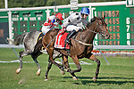 09-25-10: Arcadius, Brian Crowley up, wins the Grade I Helen Haskell Sampson Stakes and trainer Jonathan Sheppard attained his #1,000 win in steeplechasing events.