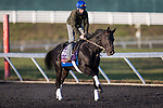 Extravagant Kid, trained by Brendan P. Walsh, exercises in preparation for the Breeders' Cup Turf Sprint at Keeneland 11.03.20.