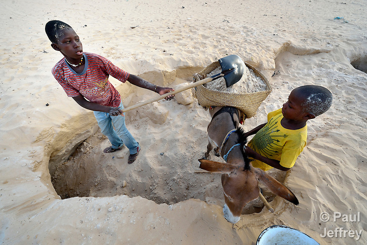 Boys harvest clean desert sand, loading it on donkeys for transport to construction sites in Timbuktu, the northern Mali city captured by Islamist forces in 2012 and liberated by French and Malian soldiers in 2013.