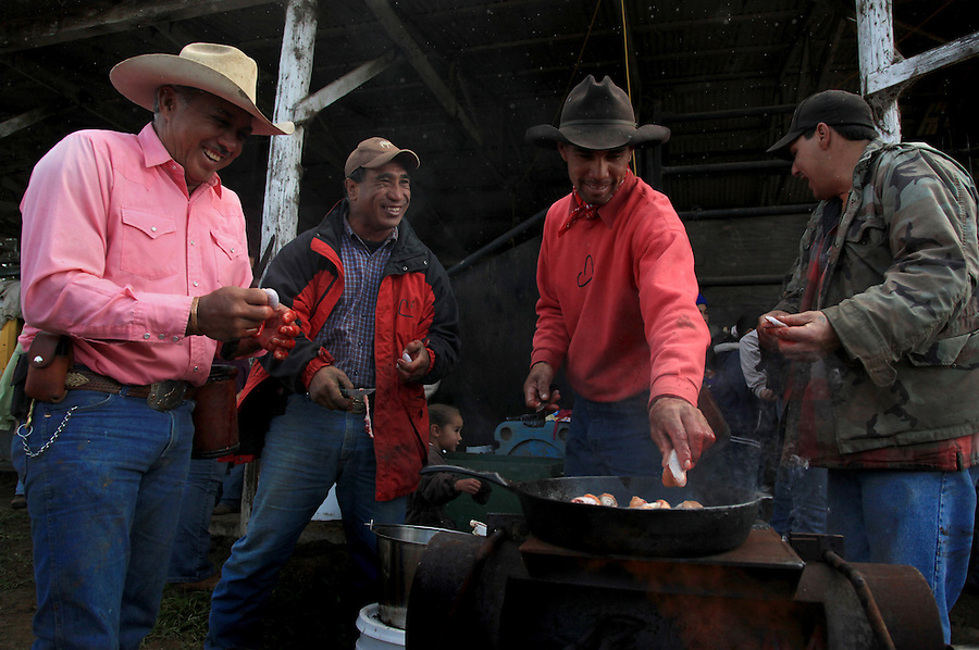 "Taking a break from their work of branding, innoculating, tagging and castrating calves at Kahua Ranch in North Kohala, Hawaii, from left, Godfrey Kainoa, Kimo Ho'opai, Wayne Tachera and Keoki Kainoa clean and prepare ""Laho"" (calf testicles) for breakfast.  These are cooked with garlic salt and oil directly over the branding fire."