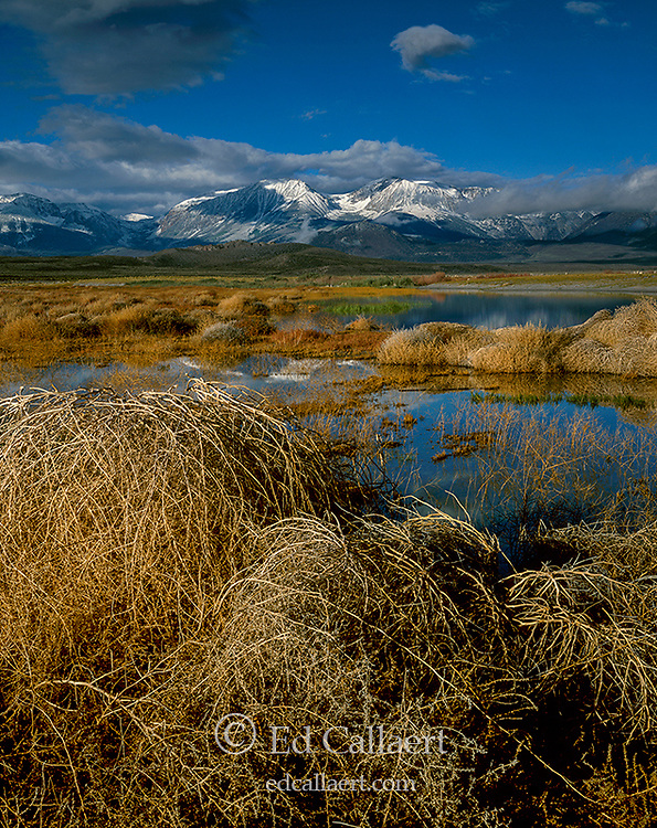 Wetlands, Mono Basin National Forest Scenic Area, Inyo National Forest, Eastern Sierra, California
